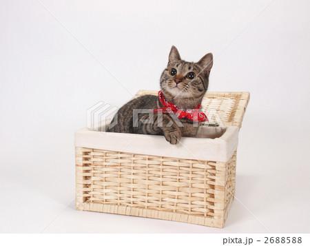 箱から顔を出す猫の写真素材 [2688588] - PIXTA