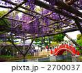 藤 藤棚 藤の花の写真 2700037