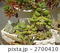 多肉植物 観葉植物 サボテンの写真 2700410