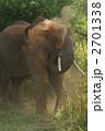 サンブル国立公園のゾウの砂浴び 2701338