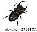 クワガタ 虫 2716573