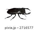 クワガタ虫 2716577