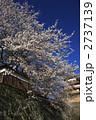 高島城 堀に写る満開の桜 2737139