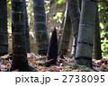 タケノコ 筍 たけのこの写真 2738095