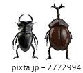 クワガタとカブトムシ 2772994