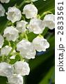 すずらん スズラン 花の写真 2833561