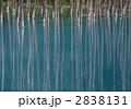 湖沼 青い池 池の写真 2838131