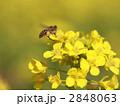 黄金の絨毯には極上の蜂蜜を運ぶ道 2848063