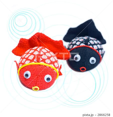 キンギョ 泳ぐ 魚類の写真素材 [2866258] - PIXTA