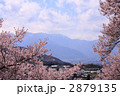 高遠城の桜 2879135