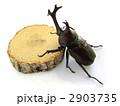 カブトムシ 2903735