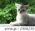 夏緑と子猫 2908230