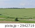 麦畑 丘 田畑の写真 2942719