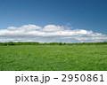草原 2950861