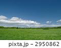 草原 2950862