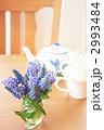 ムスカリ-01■花・ブドウヒアシンス・アイビー・マグカップ・ティーポット 2993484