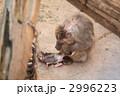 サルの毛繕い 2996223
