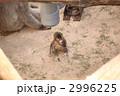 子猿 2996225
