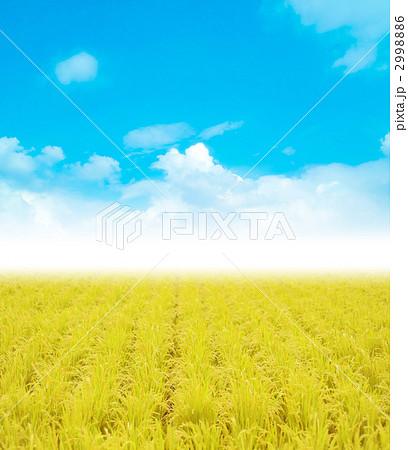 米作 水田 稲穂のイラスト素材 2998886 Pixta