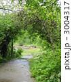 アーチ 小道 新緑の写真 3004317