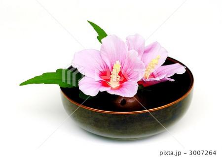 ムクゲの生け花 3007264