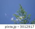 青空と竹 3012917