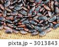 花豆 紫花豆 ベニバナインゲンの写真 3013843