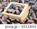 花豆 紫花豆 ベニバナインゲンの写真 3013844
