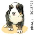 バーニーズマウンテンドッグ子犬2(地・影有) 3018794