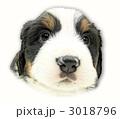 バーニーズマウンテンドッグ子犬の顔(影有) 3018796