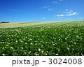 ジャガイモ畑 3024008