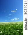 ジャガイモ畑と青空 3024014