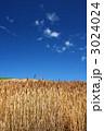 赤麦の丘 3024024