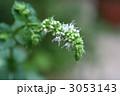 スペアミントの花 3053143