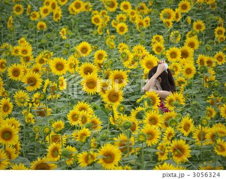 ひまわり畑と赤い服の女性 3056324