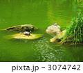 台湾の亀三匹 3074742