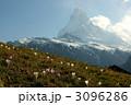 マッターホルン クロッカス 花の写真 3096286