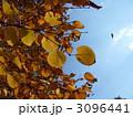 枯れ葉と空 3096441