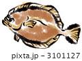 平目 ひらめ 鮃のイラスト 3101127