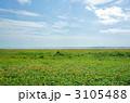 野付半島の原生花園、エゾカンゾウが満開だった 3105488