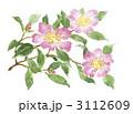 山茶花 3112609