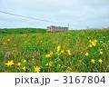 花の草原を行く列車 3167804
