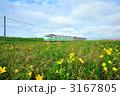 花の草原を行く列車 3167805