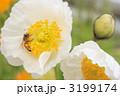 ミツバチ 3199174