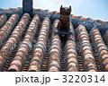 赤瓦 獅子 シーサーの写真 3220314