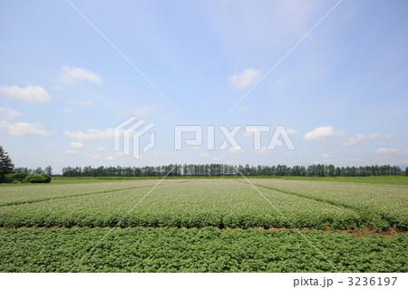 十勝・士幌町のジャガイモ畑の写真素材 [3236197] - PIXTA