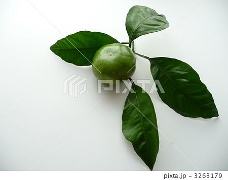 早生みかんと葉の写真素材 [3263179] - PIXTA