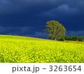 哲学の木とキガラシ 3263654