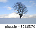 雪原と哲学の木 3286370