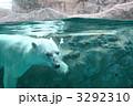 熊 白くま シロクマの写真 3292310